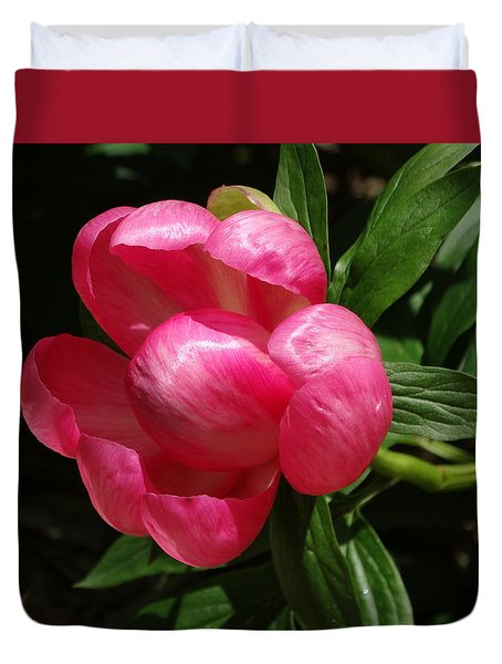 Emerging Peony Bloom Duvet Cover by Rebecca Overton