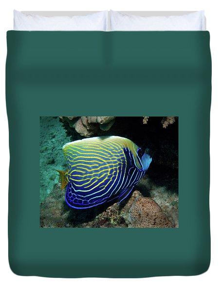 Emperor Angelfish, Red Sea 1 Duvet Cover