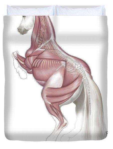 Equine Levade Duvet Cover