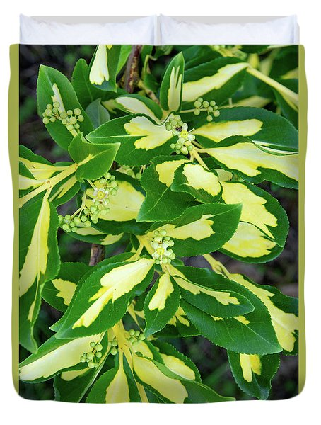 Euonymus Blondy Shrub 2 Duvet Cover