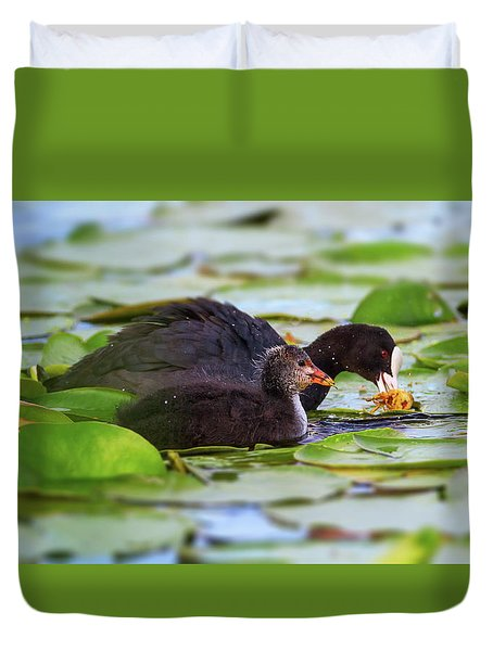 Eurasian Or Common Coot, Fulicula Atra, Duck And Duckling Duvet Cover