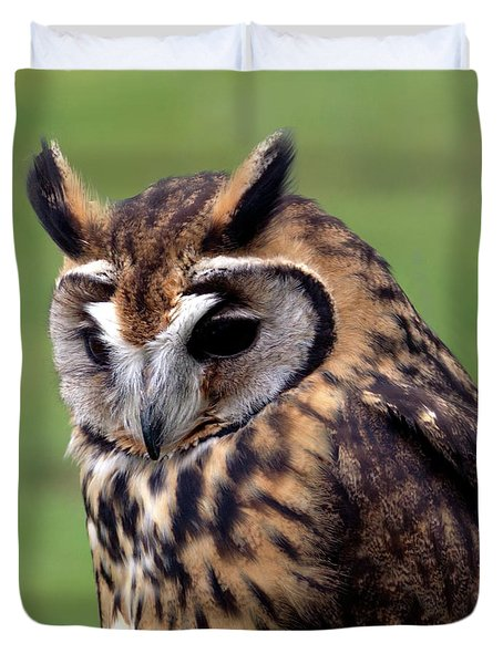 Eurasian Striped  Owl Duvet Cover by Stephen Melia
