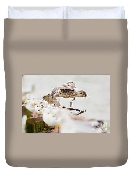 Duvet Cover featuring the photograph European Herring Gulls In A Row, A Landing Bird Above Them by Nick Biemans