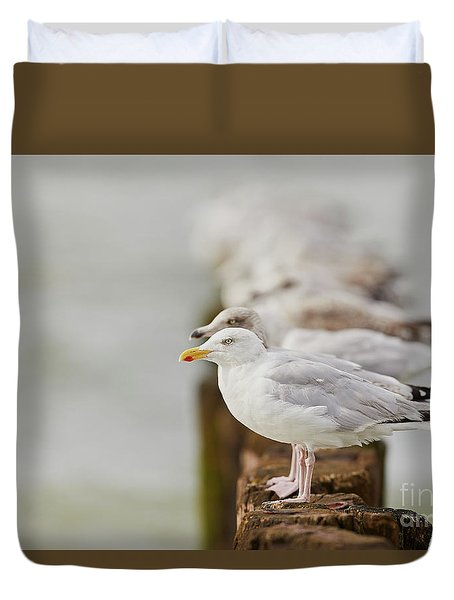 European Herring Gulls In A Row Fading In The Background Duvet Cover