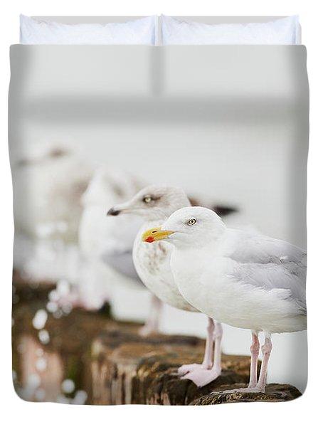 European Herring Gulls In A Row  Duvet Cover