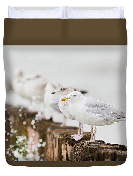 European Herring Gulls In A Row  Duvet Cover