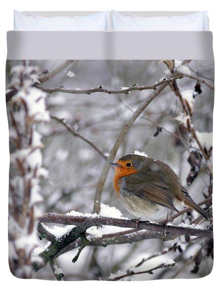 European Robin In The Snow At Christmas Duvet Cover