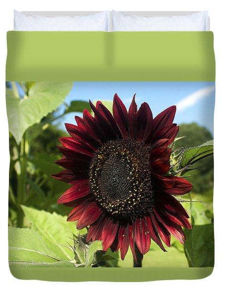 Evening Sun Sunflower #1 Duvet Cover by Jeff Severson