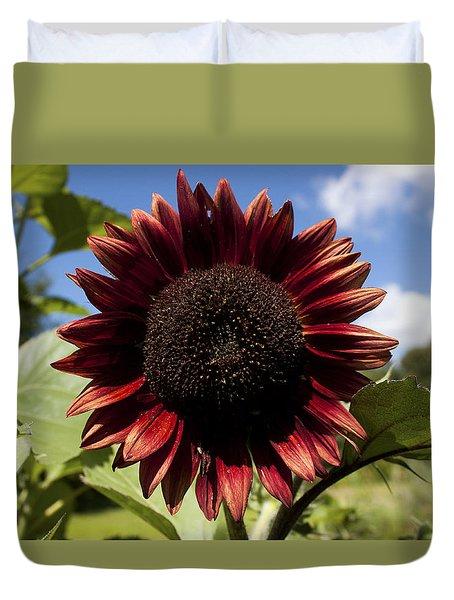 Evening Sun Sunflower #2 Duvet Cover by Jeff Severson