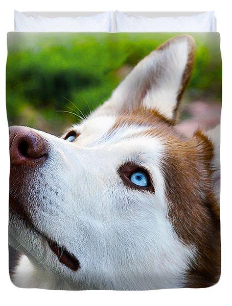 Expressive Siberian  Husky Photo C62017 Duvet Cover
