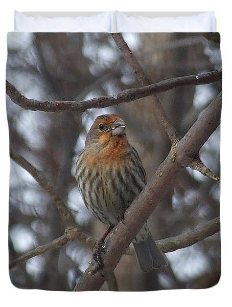 Eye-contact With The Rare - Orange Phase - House Finch Duvet Cover