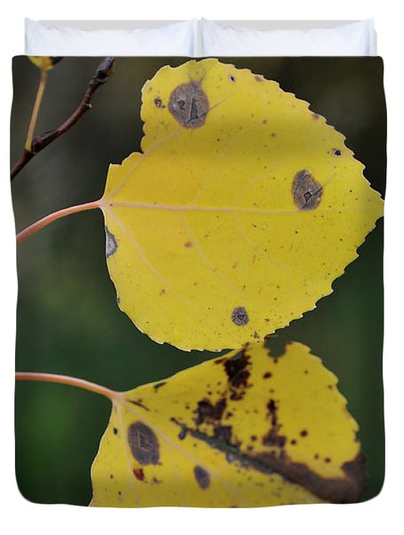Duvet Cover featuring the photograph Fading Aspen I by Ron Cline
