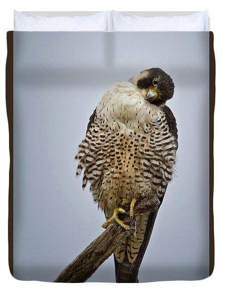 Falcon With Cocked Head Duvet Cover