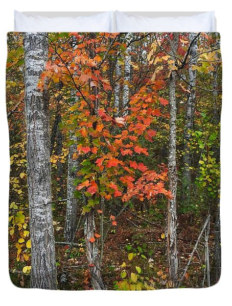 Fall Color At Gladwin 4543 Duvet Cover