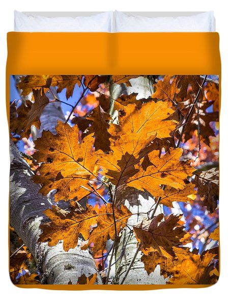 Fall Color - Bright Leaves And Blue Sky 2 Duvet Cover