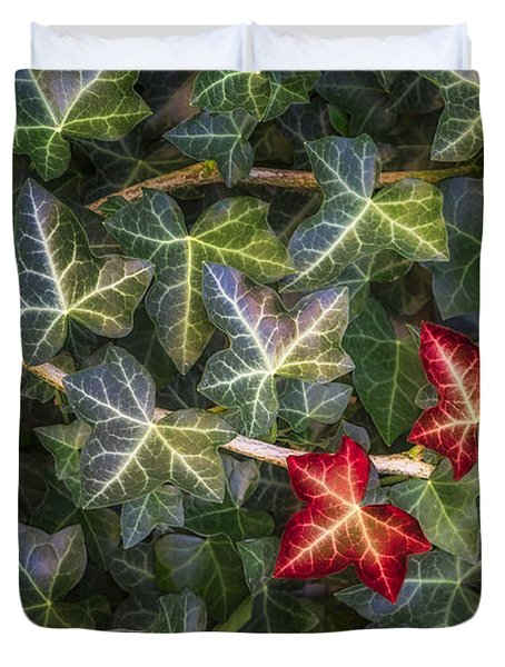 Duvet Cover featuring the photograph Fall Ivy Leaves by Adam Romanowicz