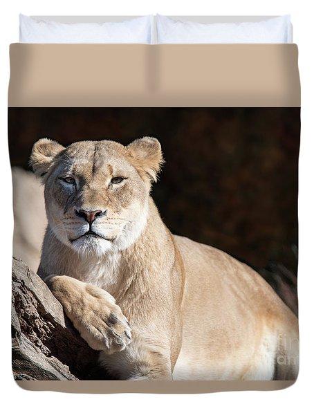 Fall Lioness Duvet Cover