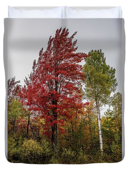 Duvet Cover featuring the photograph Fall Maple by Paul Freidlund