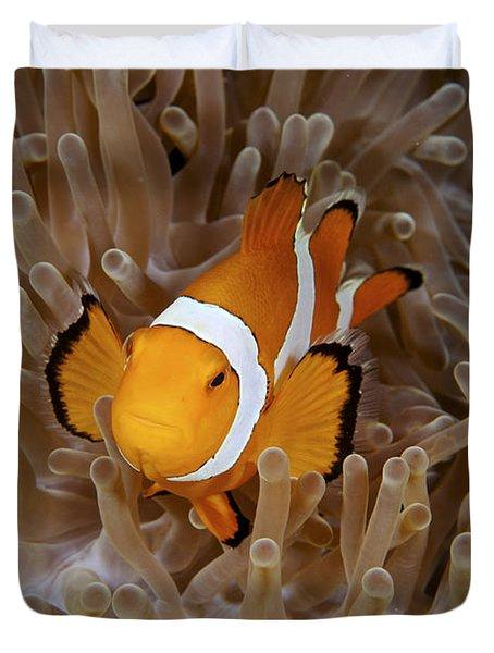 False Clownfish Duvet Cover by Steve Rosenberg - Printscapes