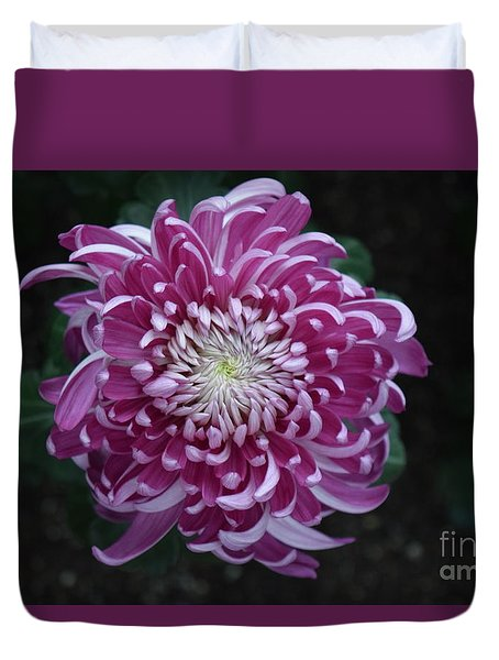 Fancy Chrysanthemum In Pink Duvet Cover