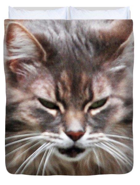 Fat Cats Of Ballard 4 Duvet Cover