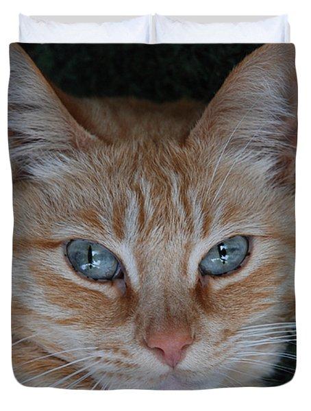 Fat Cats Of Ballard 5 Duvet Cover