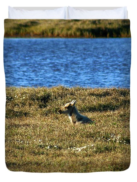 Fawn Caribou Duvet Cover by Anthony Jones