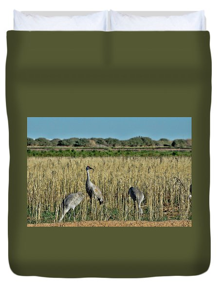 Feeding Greater Sandhill Cranes Duvet Cover