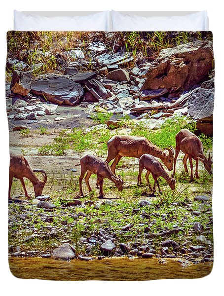 Duvet Cover featuring the photograph Feeding Mountain Sheep by Robert Bales