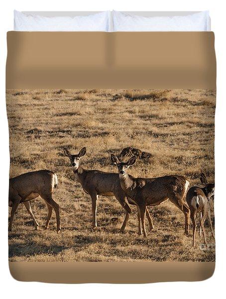 Feeding Mule Deer Duvet Cover