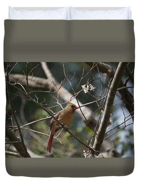Female Cardinal 3 Duvet Cover by Cathy Harper