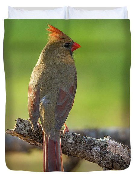 Duvet Cover featuring the photograph Female Cardinal by David Waldrop