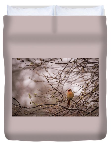 Female Cardinal In Spring 2017 Duvet Cover by Terry DeLuco