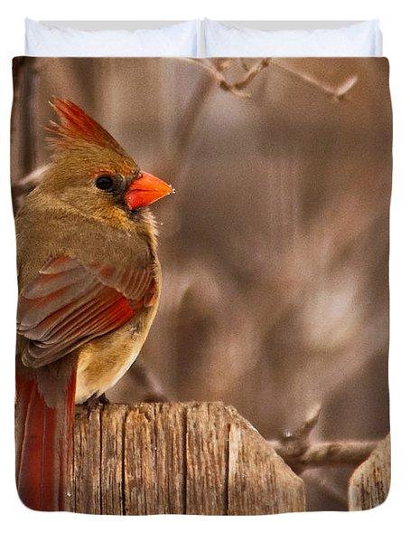 Female Cardinal On The Fence Duvet Cover