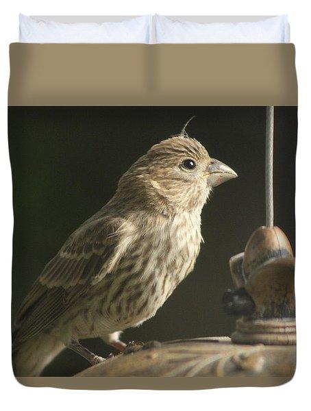 Female House Finch On Feeder Duvet Cover
