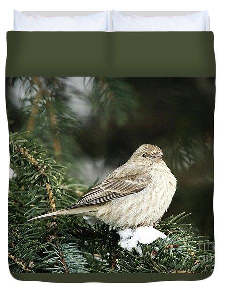 Female House Finch On Snow Duvet Cover