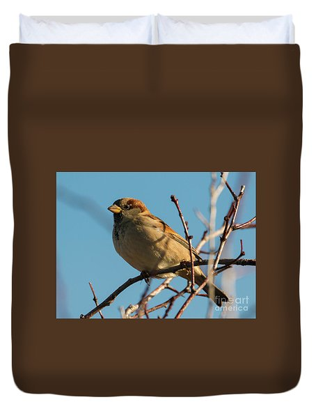 Female House Sparrow Duvet Cover by Mike Dawson