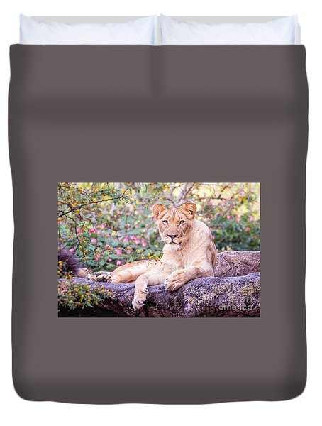 Female Lion Resting Duvet Cover by Stephanie Hayes