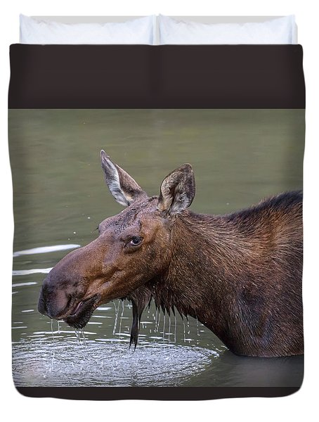 Duvet Cover featuring the photograph Female Moose Head Shot by James BO Insogna