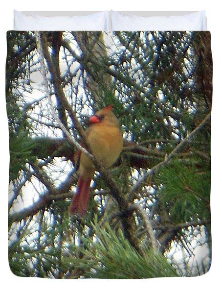 Female Northern Cardinal Duvet Cover