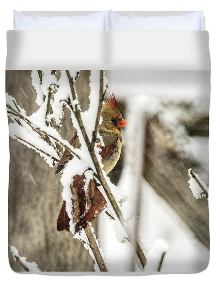 Female Readbird Through The Snow Covered Branches Duvet Cover