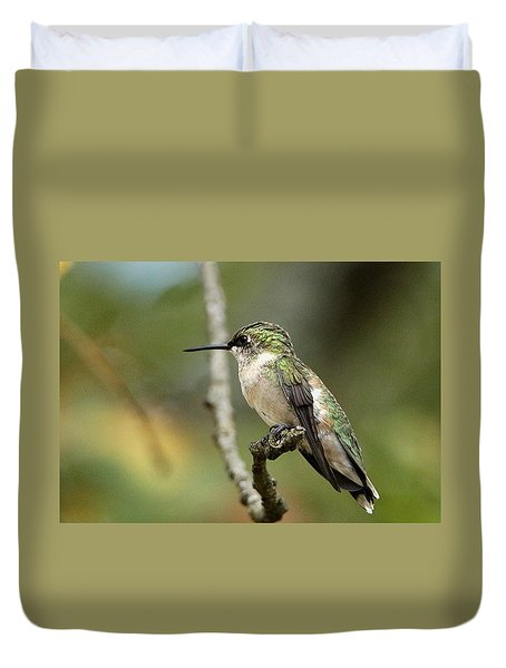Female Ruby-throated Hummingbird On Branch Duvet Cover by Sheila Brown