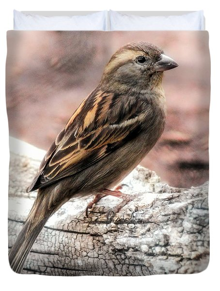 Duvet Cover featuring the photograph Female Sparrow by Elaine Malott