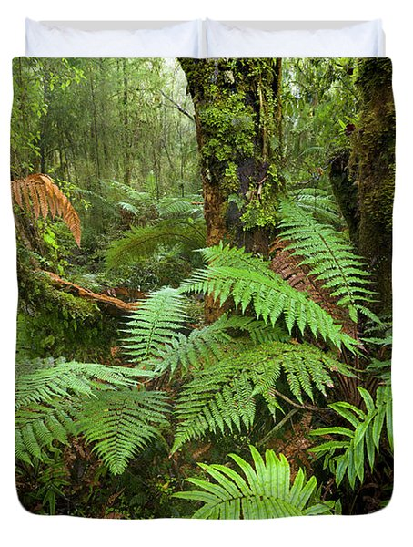 Fern In Wetland Natl Park Duvet Cover