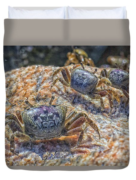 Fiddler Crabs Duvet Cover by Constantine Gregory
