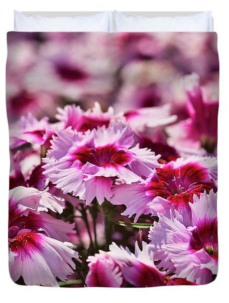 Field Of Dianthus  Duvet Cover