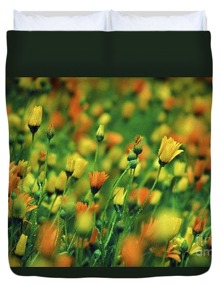 Field Of Orange And Yellow Daisies Duvet Cover