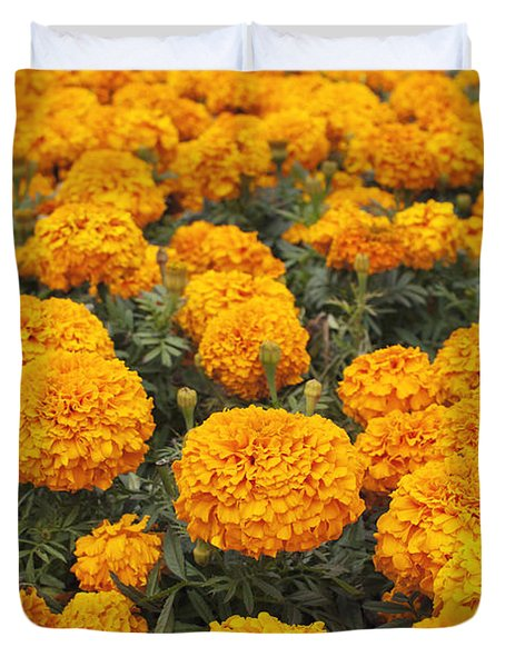 Duvet Cover featuring the photograph Field Of Orange Marigolds by Cindy Garber Iverson