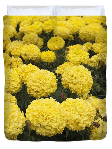 Duvet Cover featuring the photograph Field Of Yellow Marigolds by Cindy Garber Iverson
