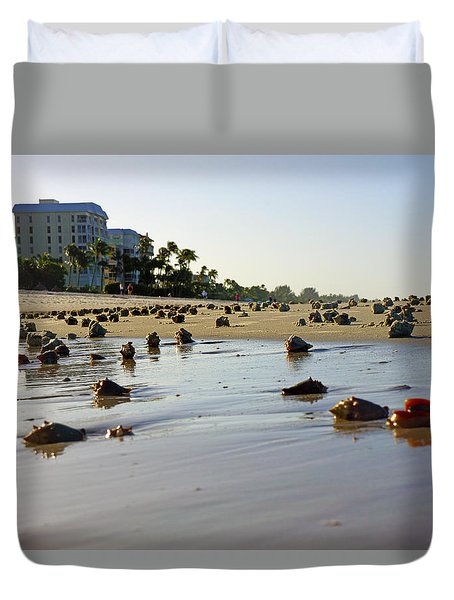 Fighting Conchs At Lowdermilk Park Beach In Naples, Fl  Duvet Cover